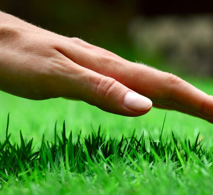 Lawn Care Top Tips from Radmore and Tucker