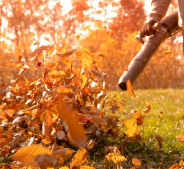 GARDEN TIPS AND TRICKS FOR AUTUMN