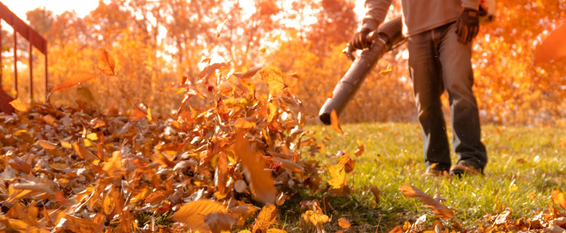 Garden Tips And Tricks For Autumn Radmore Amp Tucker