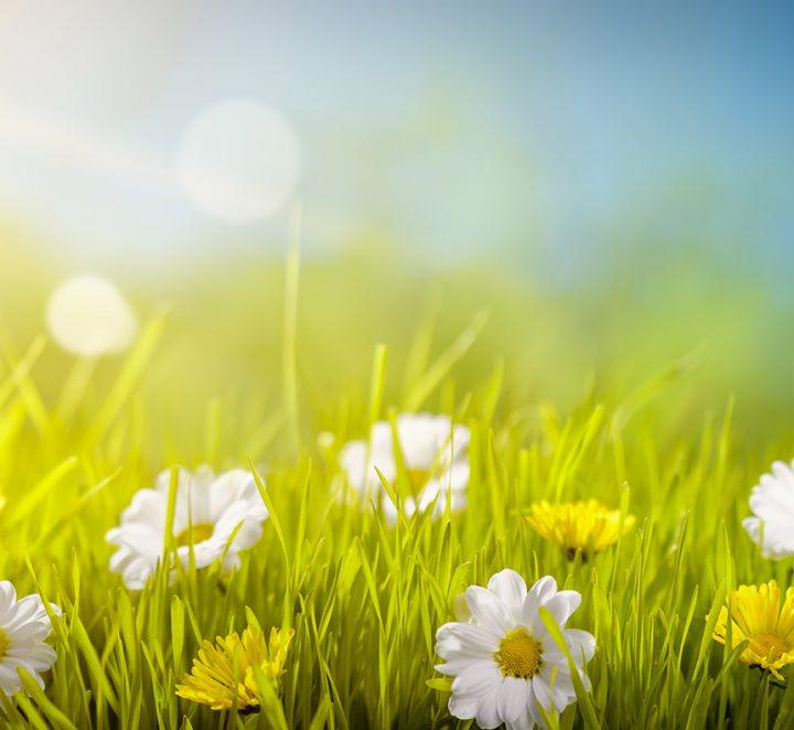 15 Ways Eco-Friendly Gardening Ideas