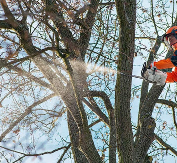 CHOOSING THE RIGHT STIHL TOP HANDLE CHAINSAW