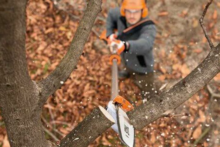 A Guide to Stihl Pole Pruners